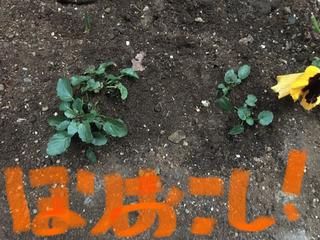239C10B4-E867-447C-817B-F92216A2536C.jpg